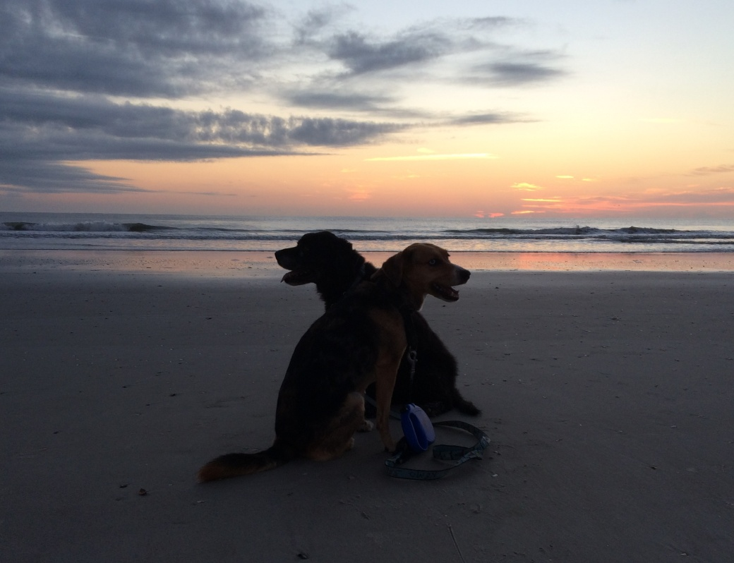 Oct 2015 best dogs sunset